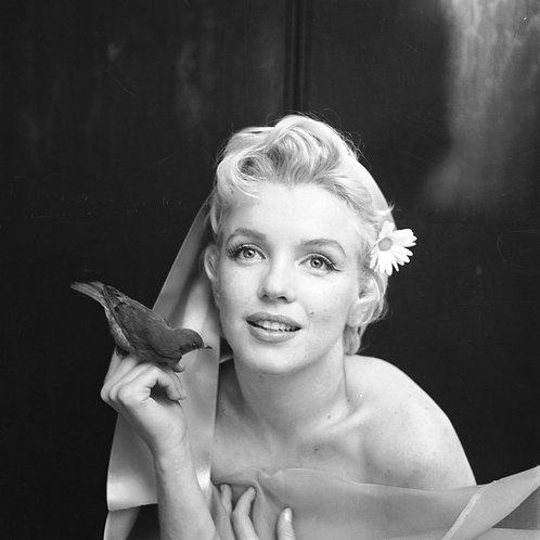Marilyn Monroe, AmbassadorHotel, New York, February 1955 [Price on request]