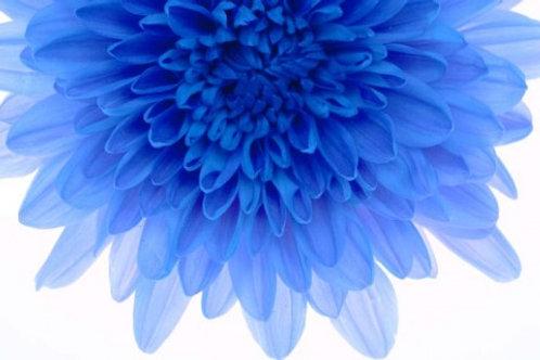 Flowers, Sang Soo Ryoo