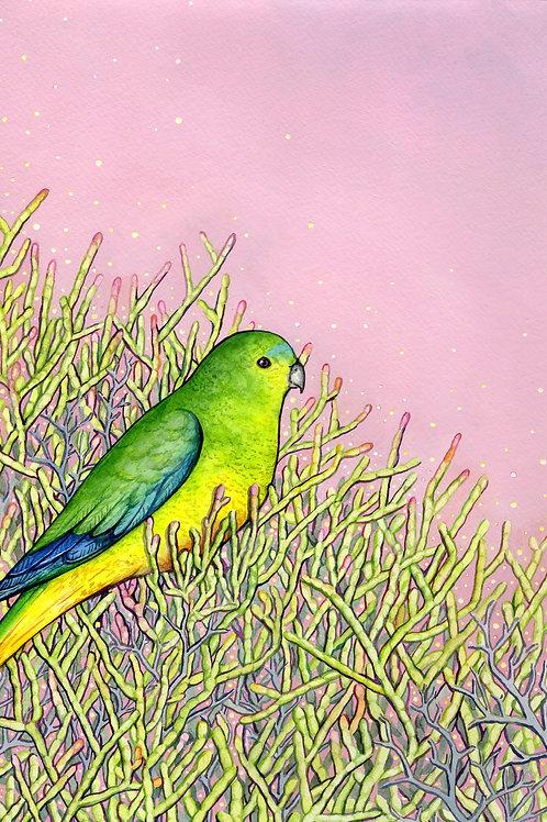 Orange Bellied Parrot, Ingrid Bartkowiak