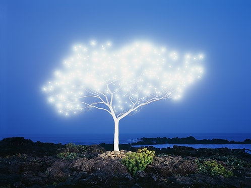 Tree of Life in Island, Jung Lok Lee [Price on request]