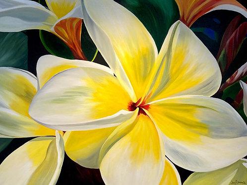 Sunshine Frangipani, Joy Connell