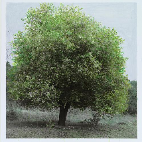 Study of green-spring, Hong Gu Kang