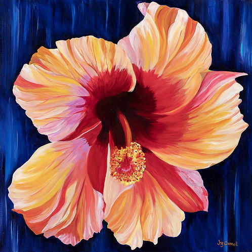 Glowing Hibiscus, Joy Connell