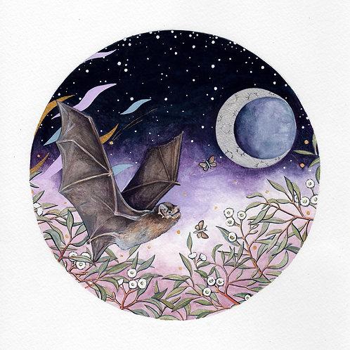 Southern Bent - Winged Bat, Ingrid Bartkowiak