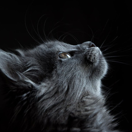 'My Cat Is An Atheist': A Poem by Phoebe Woofter