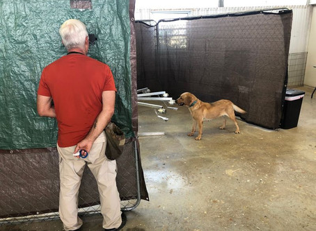 APG researchers, UPenn training dogs to detect asymptomatic coronavirus carriers...