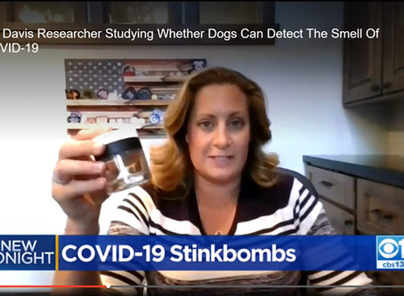 UC Davis Researcher Studying Whether Dogs Can Detect The Smell Of COVID-19