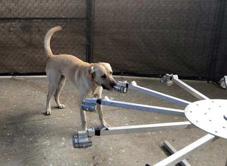 Army, University of Pennsylvania team up to train virus-detecting dogs