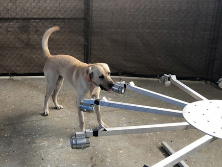 Army, University of Pennsylvania team up to train virus-detecting dogs