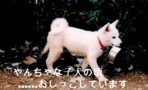 ごんた jpeg_edited_edited_edited.jpg
