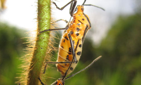 RBCS_Insectos_1.jpg