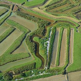 Le marais de Brouage aux alentours de Saint-Jean-d'Angle