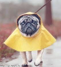 Rainy Day Adventures...