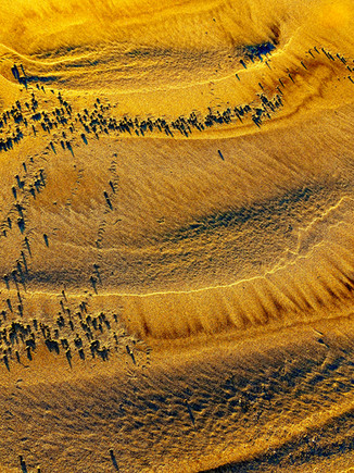 """Fleeing In the Sand   39"""" x 31""""   Photography"""