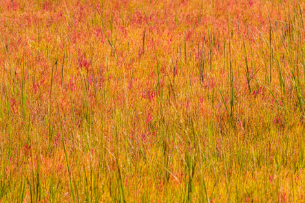 "Marsh Grass in Autumn | 12"" x 18"" 