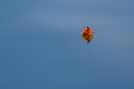 """A Leaf Floats By 