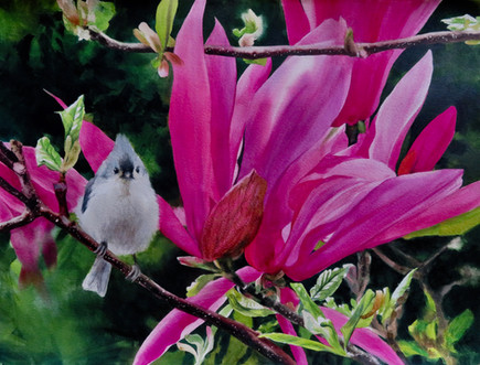 "Titmouse in the Magnolia | 22"" x 30"" 