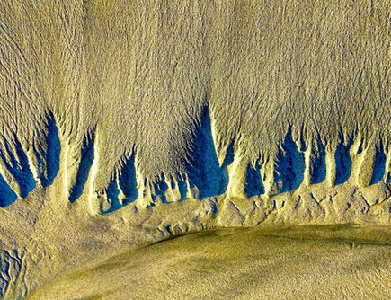 """Willows In the Sand   19"""" x 23""""   Photography"""