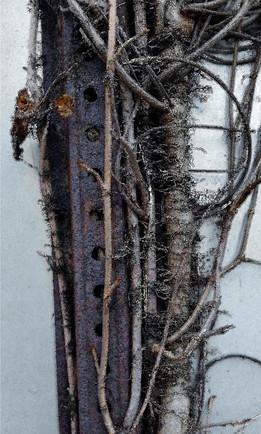 "Steel Vines 1 | 10""x 6"" | Digital Photography"