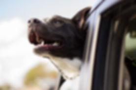 dog-1149964_640.jpg