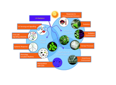 A perspective on ecologically relevant plant-UV research and its practical application