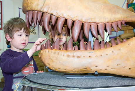 Museums Vic Dinosaurs.jpg