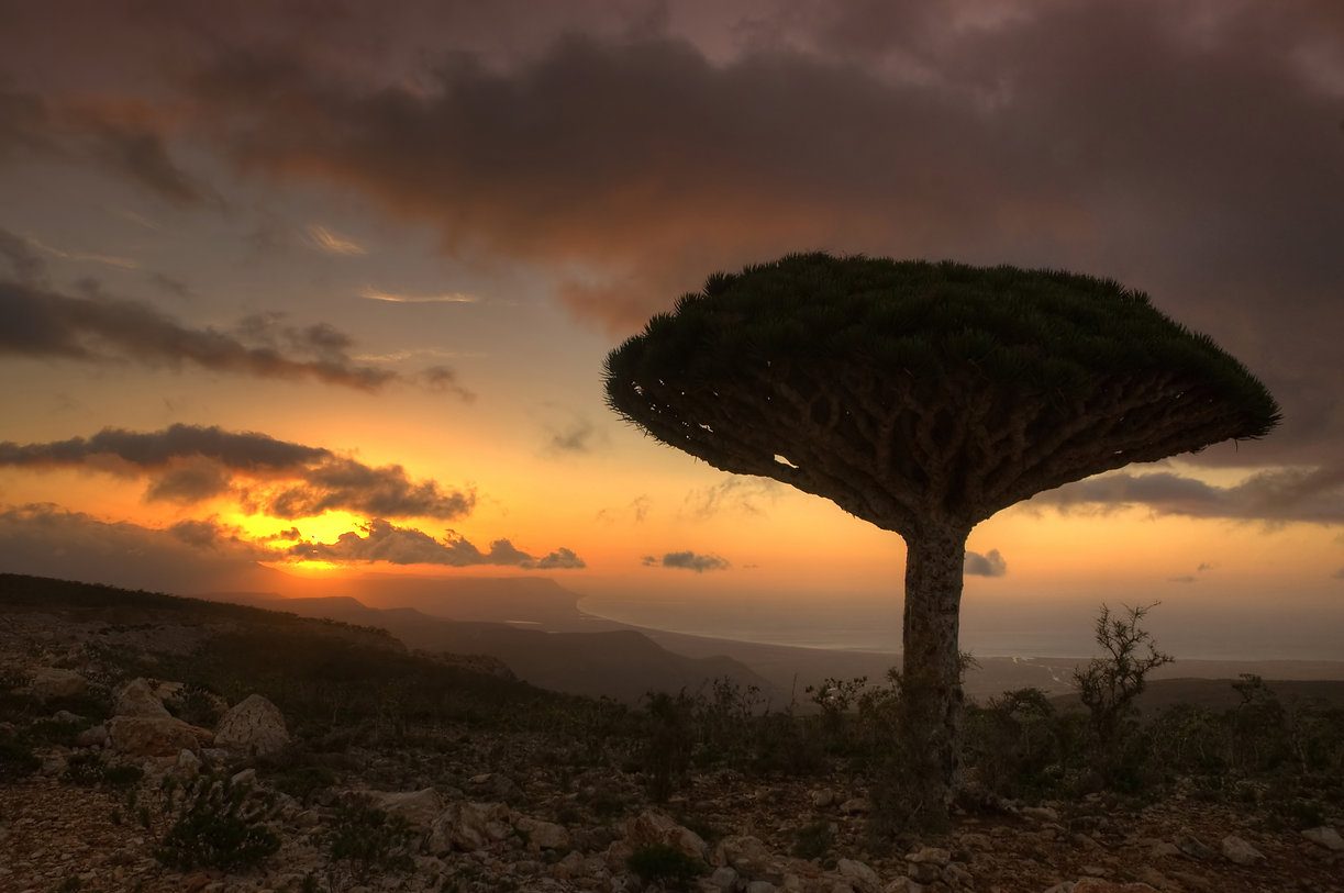 socotra with dramatic sunset wit cloudy