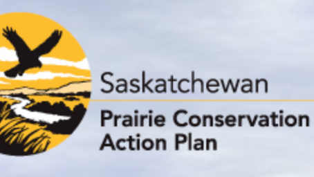 A Prairie Conservation Action Plan Webinar Series