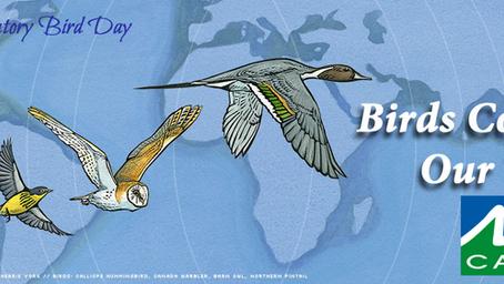 World Migratory Bird Day of 2020