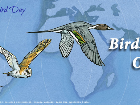World Migratory Bird Day of 2020