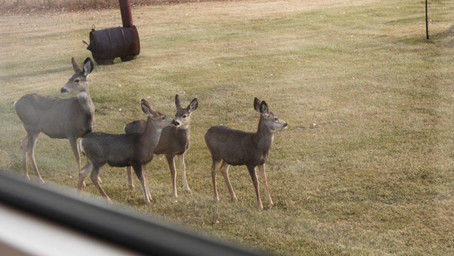 Friendly Muley Neighbours