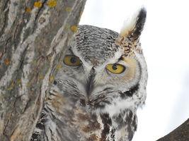 Owl122219.jpg