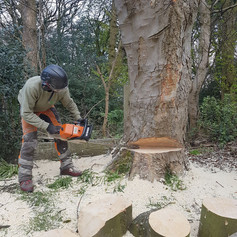 Tree Removal Manchester