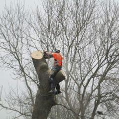 Tree Removal Derbyshire