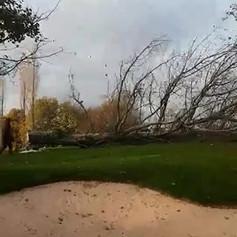 Tree Removal Peak District
