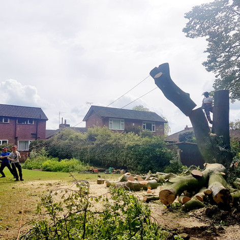 Tree Felling Stockport