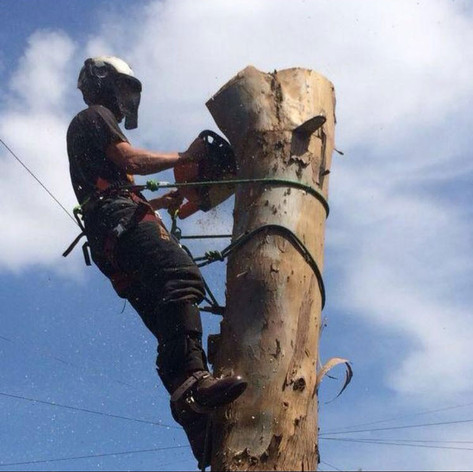 Tree Removal Northwest