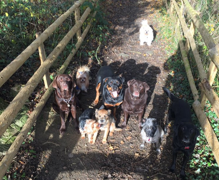 1 Hour Slot ,£25 (Max 8 Dogs,4 Vehicles)