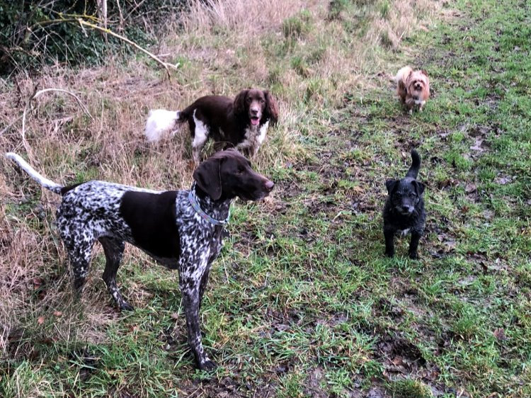 1 Hour Slot, £15 (Max 4 Dogs,2 Vehicles)