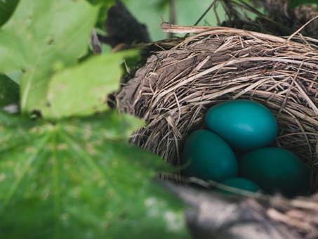 Noticing Nests