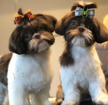 Scarlet and Peggy after their groom