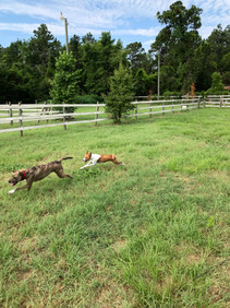 Belle and Comet playing case