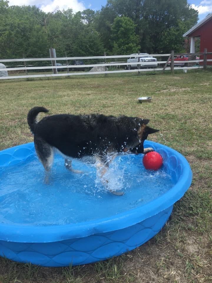 Loki in the pool