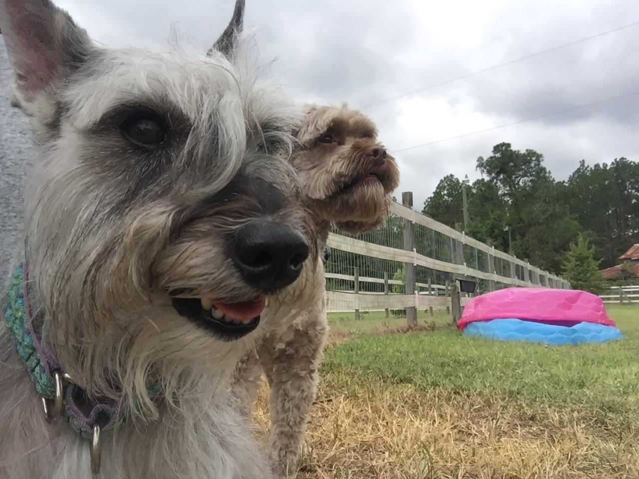 Fritz and Brady taking in so sun