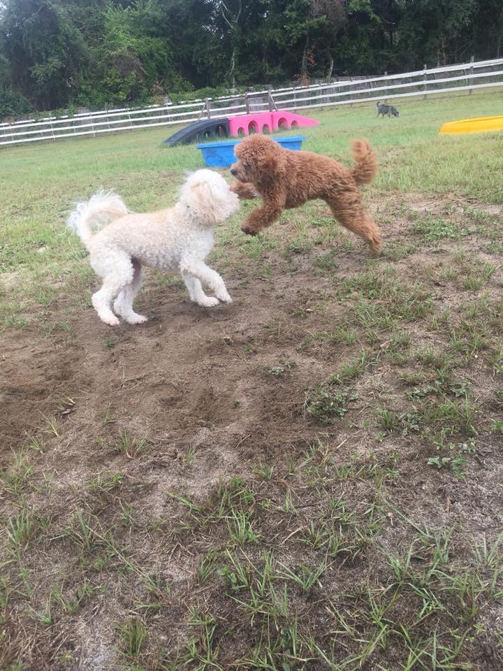 Chip and Cooper playing tag