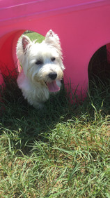 Duffy playing hide and seek