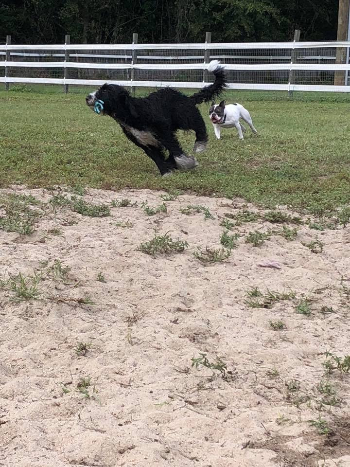 Belle and Mae playing chase