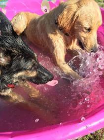 best friends in the pool
