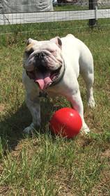 Loui playing ball