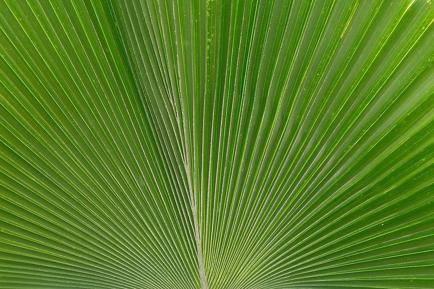 African luscious leaf
